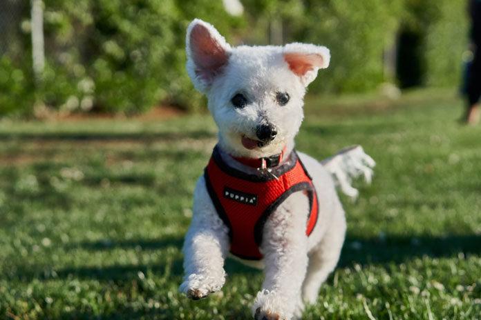 Jak wybrać odpowiedni produkt do kąpania psa?
